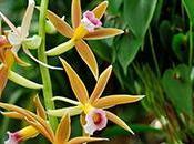 Allez découvrir toutes variétés d'Orchidées, Jardin Plantes