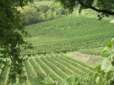 Vente aux ench res du 29 avril 2014 en faveur des vignerons de l 39 appellat - Vente aux encheres des domaines de l etat ...