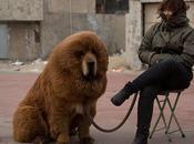 chien plus cher monde (1,4 million d'euros)