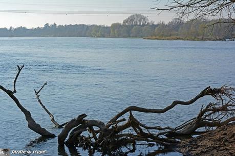 Panorama sur la Loire depuis la Pointe de Courpain