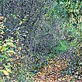 Observation des oiseaux sur la loire en automne...