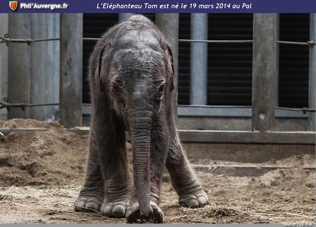 elephanteau_tom_lepal2