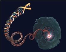 CANCER du SEIN: La vitamine A inverse l'évolution des cellules précancéreuses  – lnternational Journal of Oncology