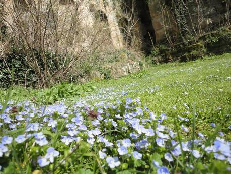 le petit pays au printemps