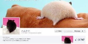 hamster-butt