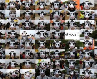 Selfie de la vache en colère, et vous ?