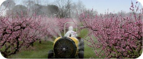 Monsanto veut contrôler le business des abeilles