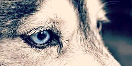 Pour l'amour de votre pitou... et de son éducation!  #doglover