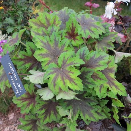 La f te des plantes de saint jean de beauregard a 30 ans c est ce week end voir - Fete des plantes saint jean de beauregard ...