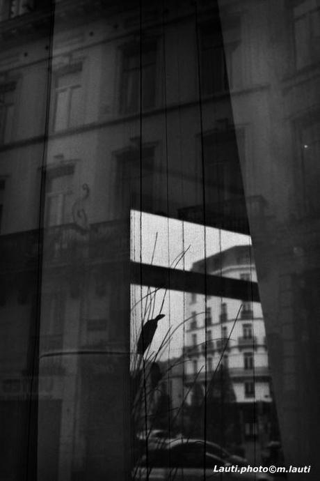 Fenêtre sur Bruxelles.