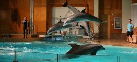 La_captivite_des_dauphins_reduit_drastiquement_leur_esperan.jpg
