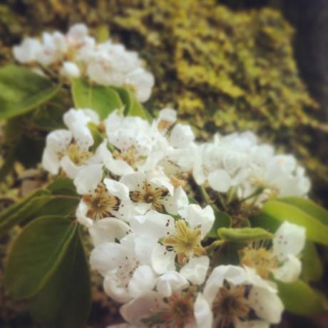 Les bonheurs de ma semaine en mots et en photos instagram (46)