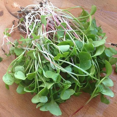 Pousses de radis du jardin et sa vinaigrette framboise