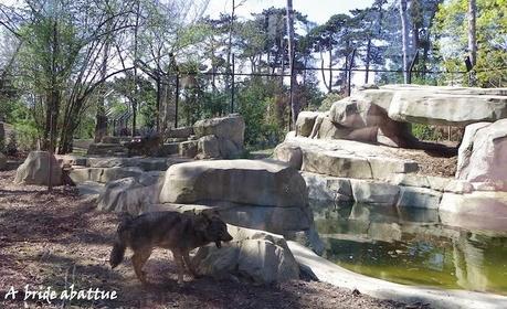 Visite du Parc zoologique de Paris une semaine avant la réouverture