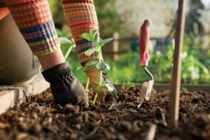 Le jardinage s'invite au printemps !