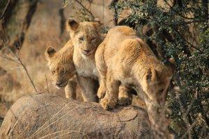 African-Safari-3D-Photo-01