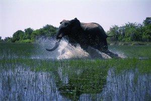African-Safari-3D-Photo-03