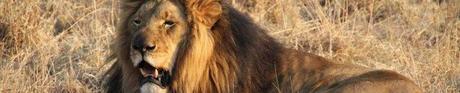 African-Safari-3D-Banner-1280px