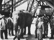 lieu, histoire: éléphante Tour Eiffel