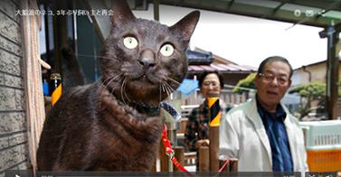 Un chat retrouve ses maîtres 3 ans après le tsunami (Japon)