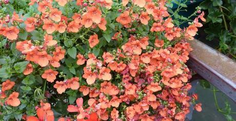 5 plantes du jardin toxiques pour nos chiens et chats - Plantes toxiques non toxiques chien chat ...