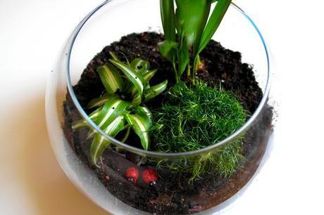 diy mini terrarium paperblog. Black Bedroom Furniture Sets. Home Design Ideas