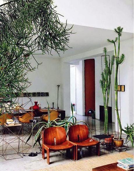 nouvelle tendance d co le cactus voir. Black Bedroom Furniture Sets. Home Design Ideas