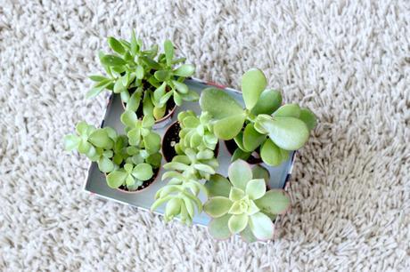 Mon petit jardin d int rieur paperblog - Petit jardin d interieur ...