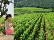 vins Bourgogne #lesbonsplans