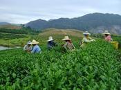 Chiang Agro-tourisme [HD]