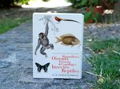 Planches dictionnaire d'histoire naturelle, vous aime