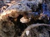 Vacillations mycélium fille l'air