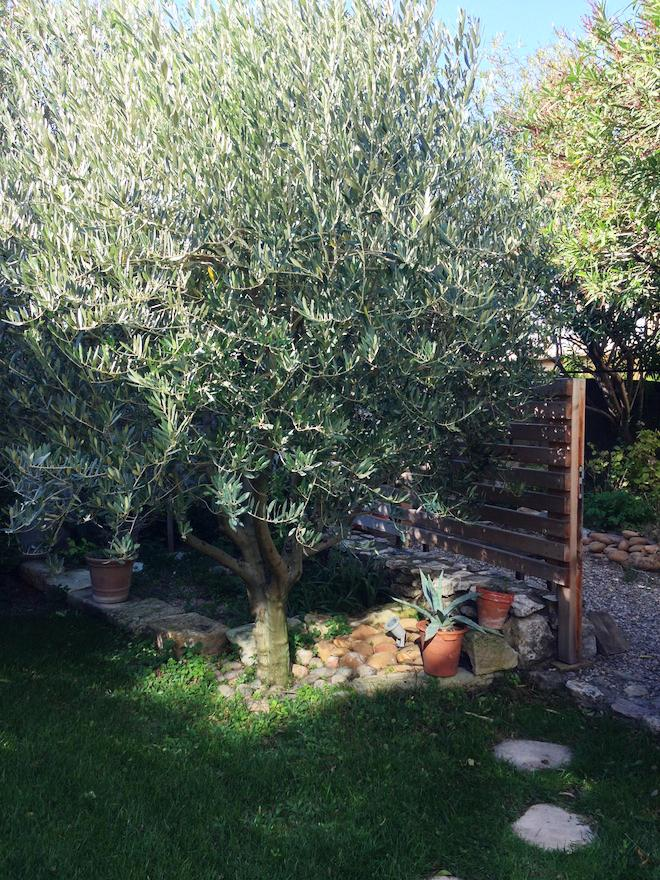 olivier-provence