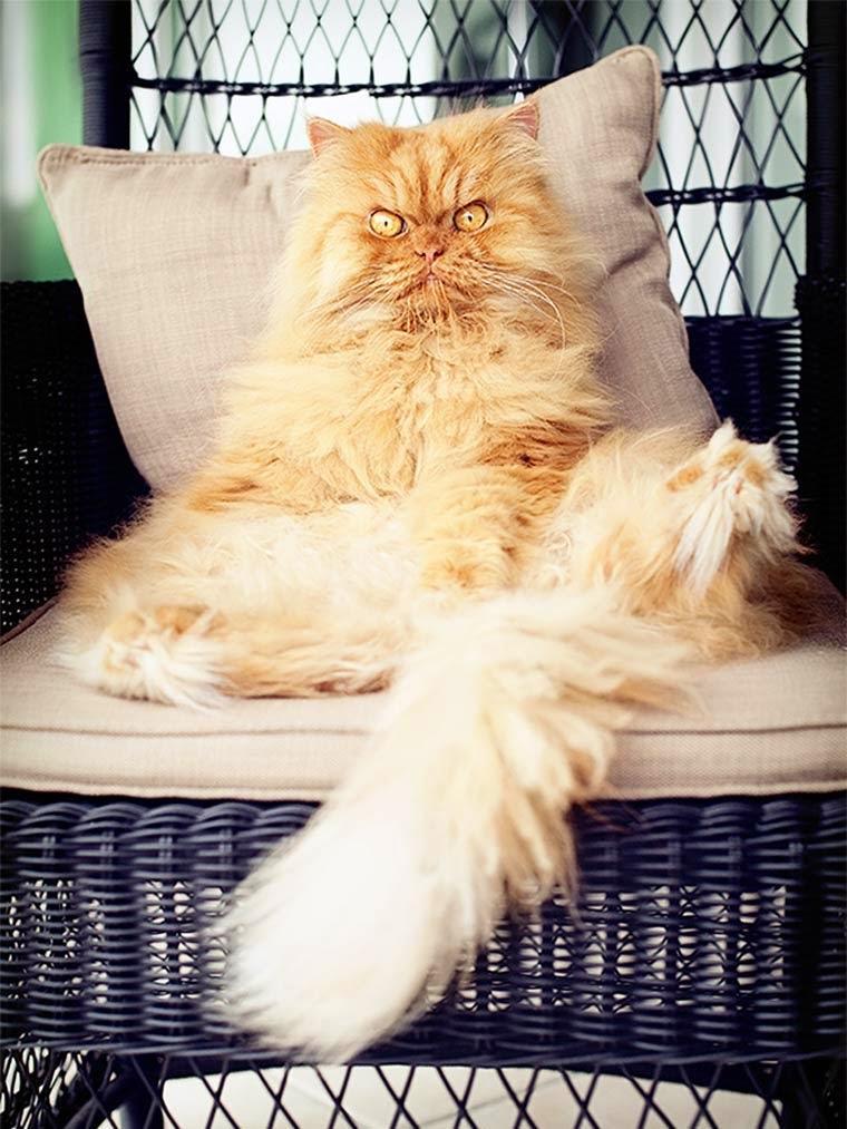 Garfy le chat le plus grincheux du Monde