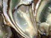 Petits choux farcis huîtres Cancale, anis étoilé Gros Plant