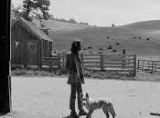 Blonde Idiote Bassesse Inoubliable********************Harvest Neil Young