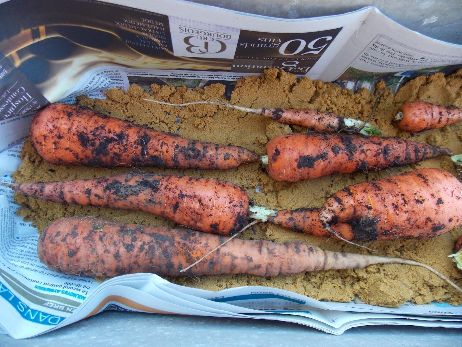 Comment conserver ses l gumes racines voir - Comment conserver les carottes ...