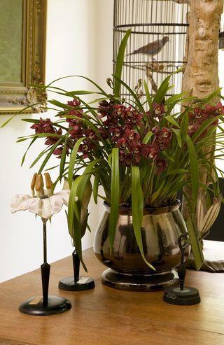 4 conseils d 39 entretien pour l 39 orchid e cymbidium paperblog. Black Bedroom Furniture Sets. Home Design Ideas