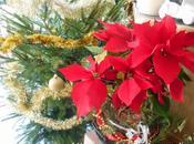 Compo Noël avec Poinsettia