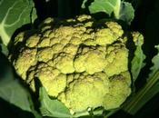 chou-fleur vapeur gingembre