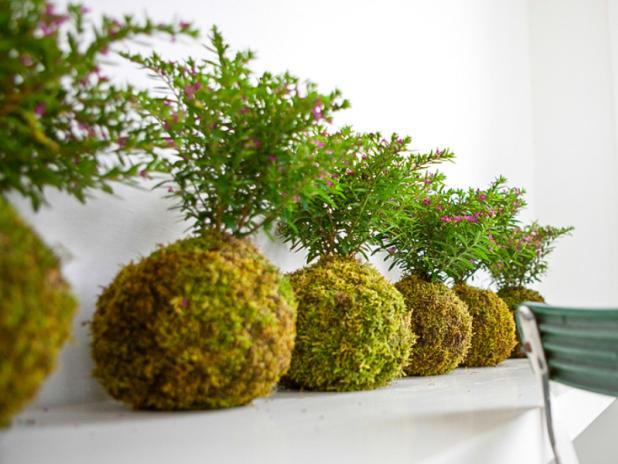 kokedama un art mi chemin entre le bonsa et l art floral d couvrir. Black Bedroom Furniture Sets. Home Design Ideas