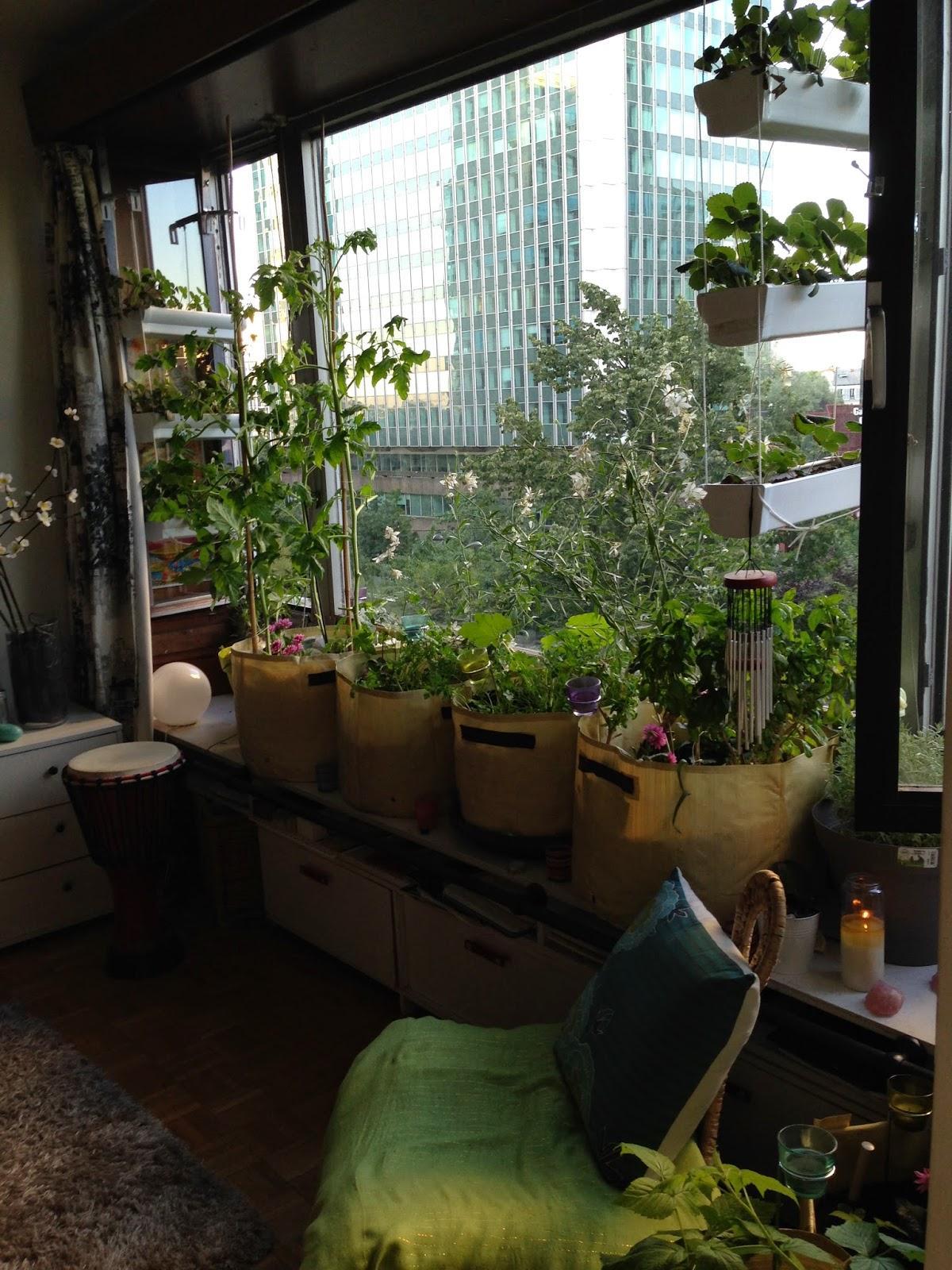 Le potager d 39 int rieur 2014 r ussites checs for Cherche appartement avec jardin