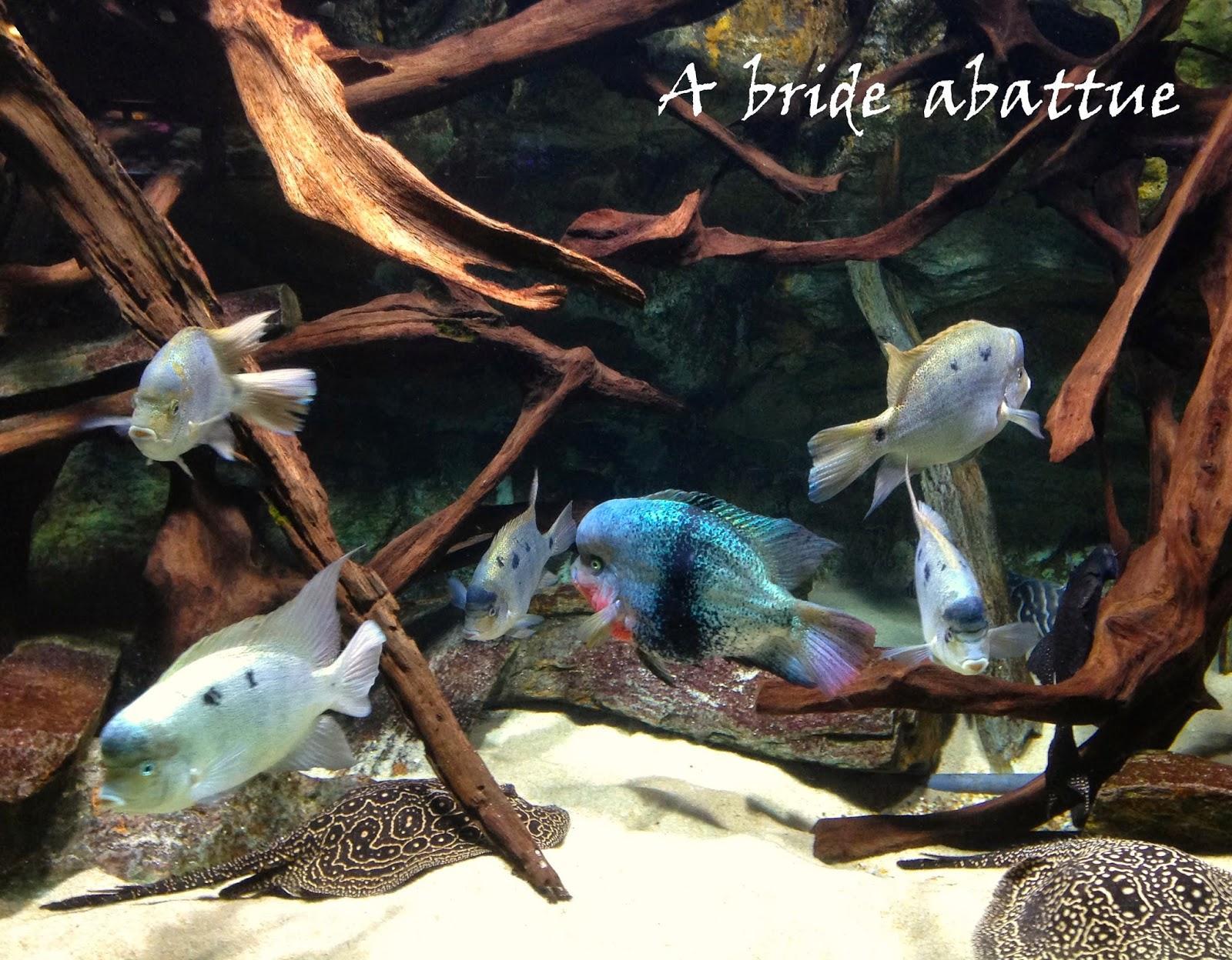 l aquarium de la porte dor 233 e 192 voir