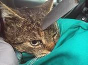 chat couteau cuisine planté dans tête