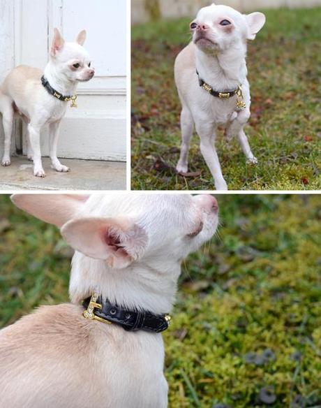 Mon collier chic et strassé de chez Made in Dog