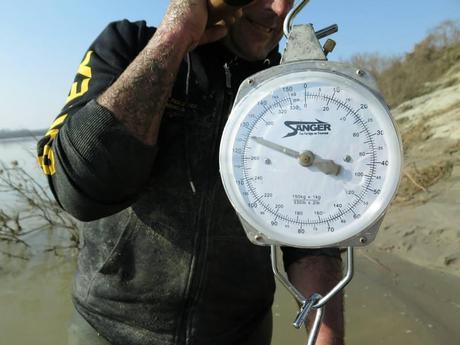 Deux hommes pêchent un silure géant (127 kg)