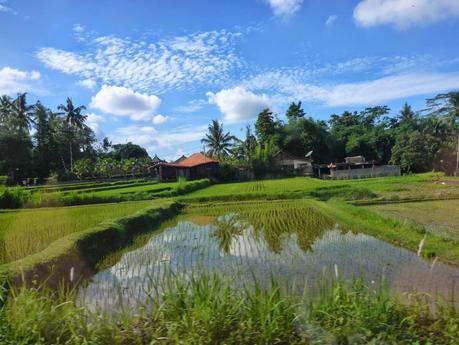 Rizières inondées à Bali, Indonésie