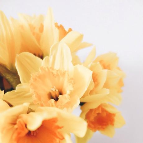 It's monday…good morning #monday #endoftheweekend #flowers #yellow #hello #sun #picoftheday #happyday