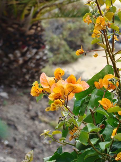 Fuerteventura - îles canaries