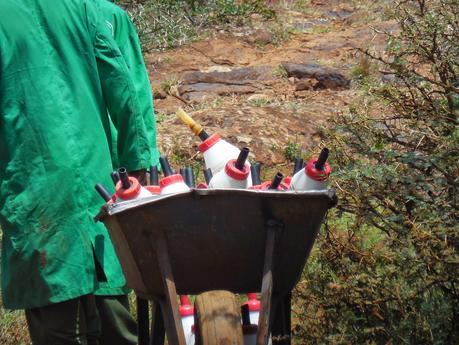 we à nairobi (2) les éléphanteaux